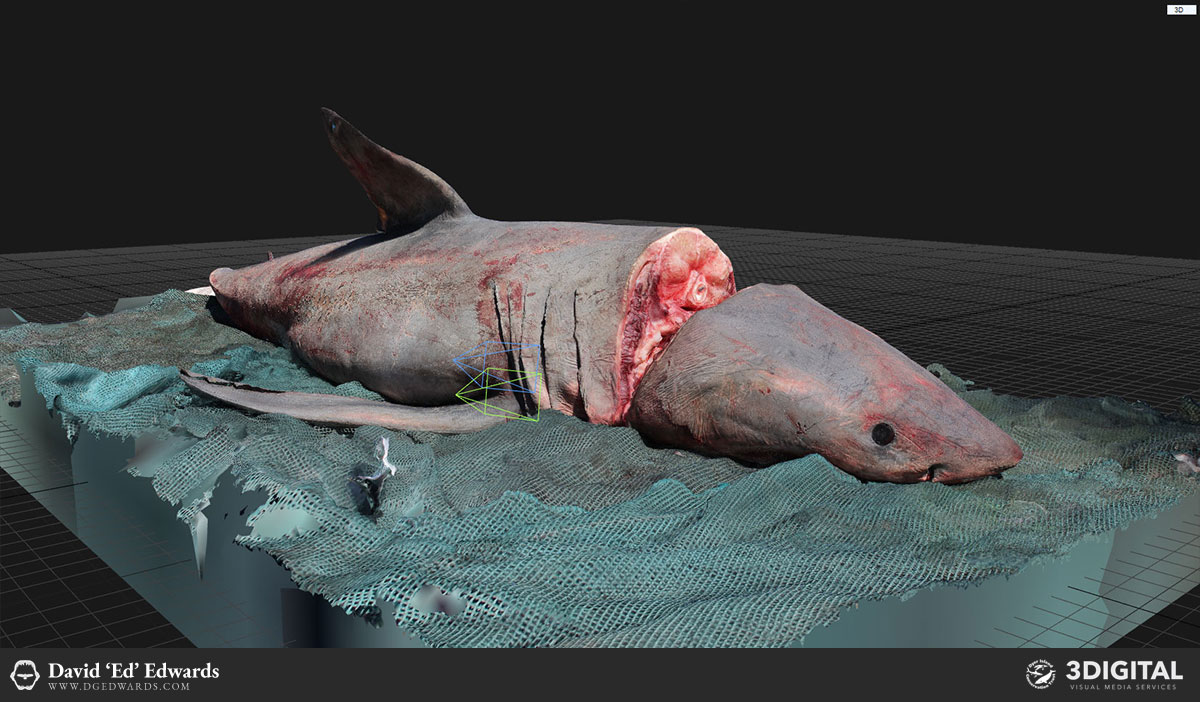 Great white shark photogrammetry