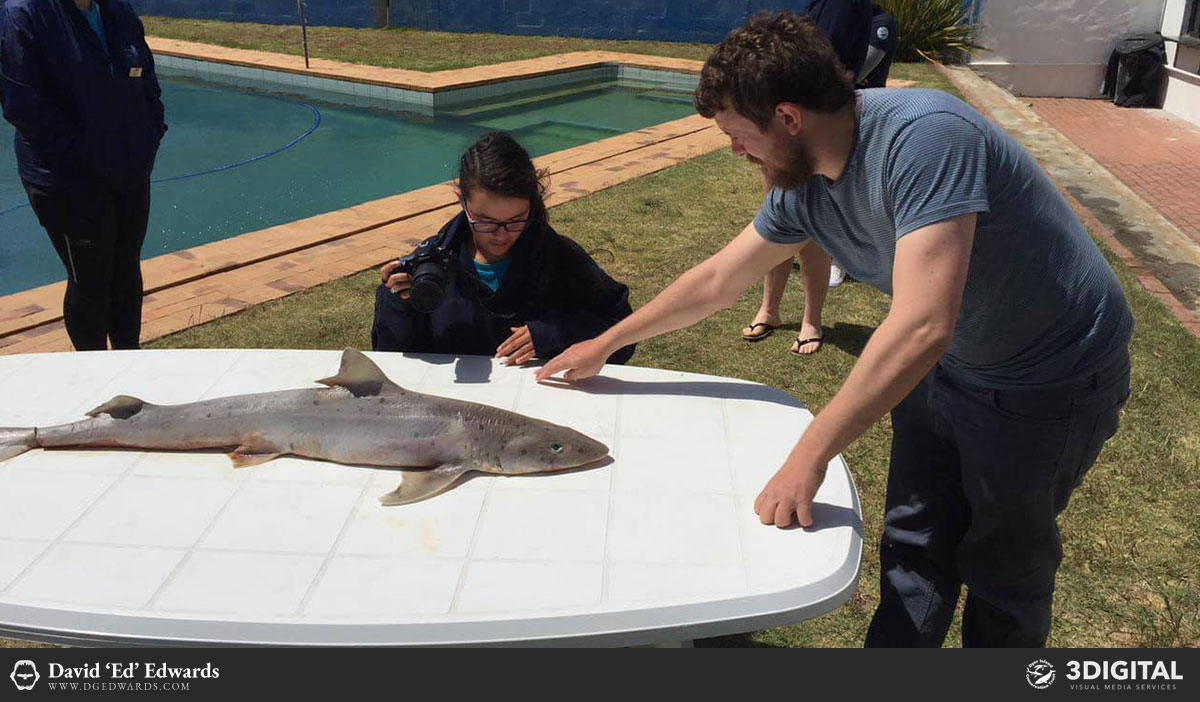 Training students in shark photogrammetry