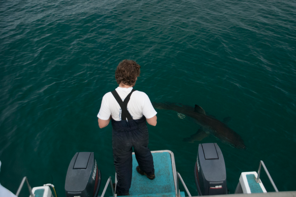 This is a picture of me with a great white shark, because I'm told images help make blog posts more interesting… wait, not blog posts – journal posts!!