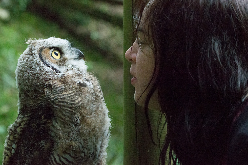 Anna Phillips vs Stinky, the great horned owl baby