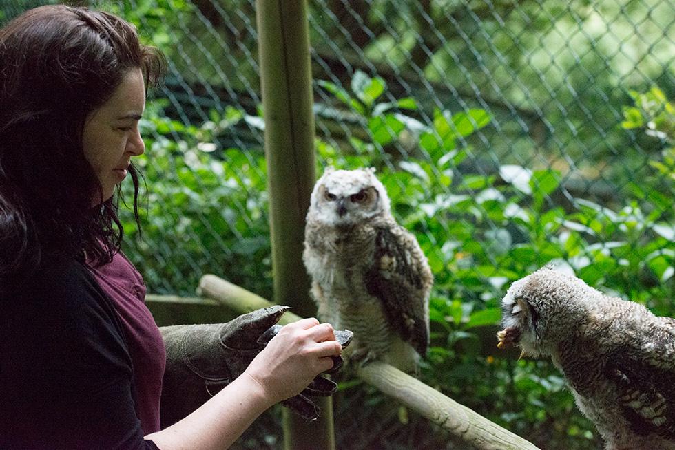 Anna feeding a pair of great horned owls
