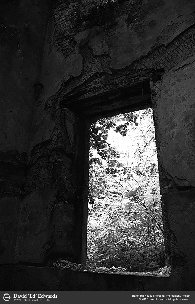 Window of an abandoned building looking out towards the forest