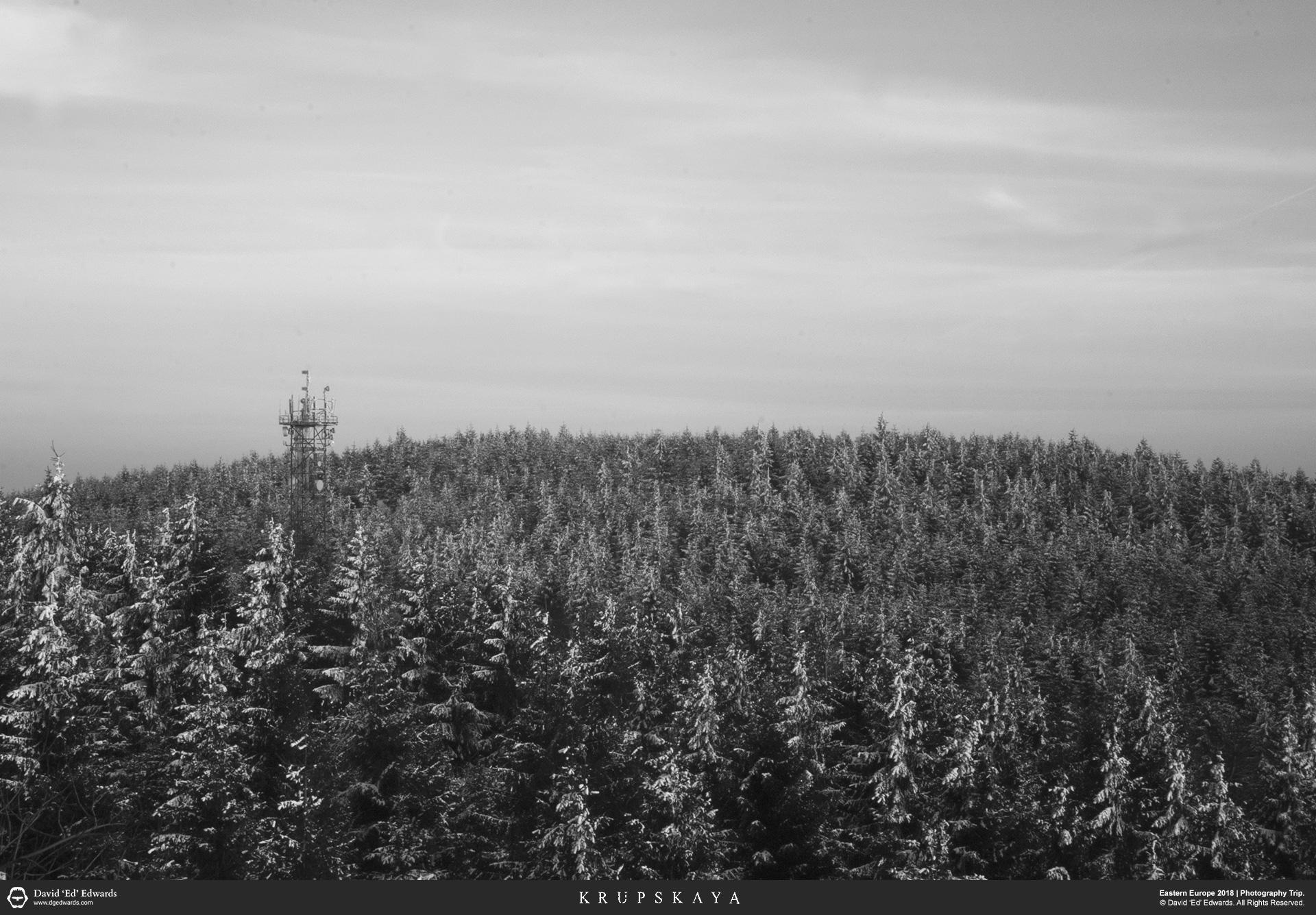 Forest, Liberec