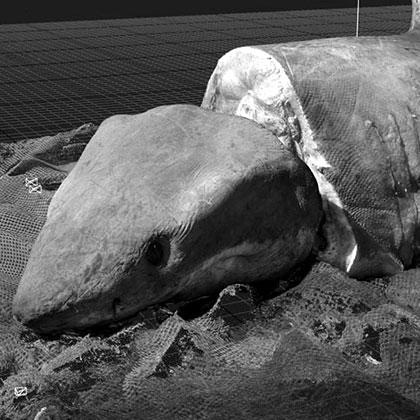 Shark 3D Photogrammetry Experiments