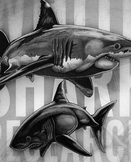 White Shark Research Priorities
