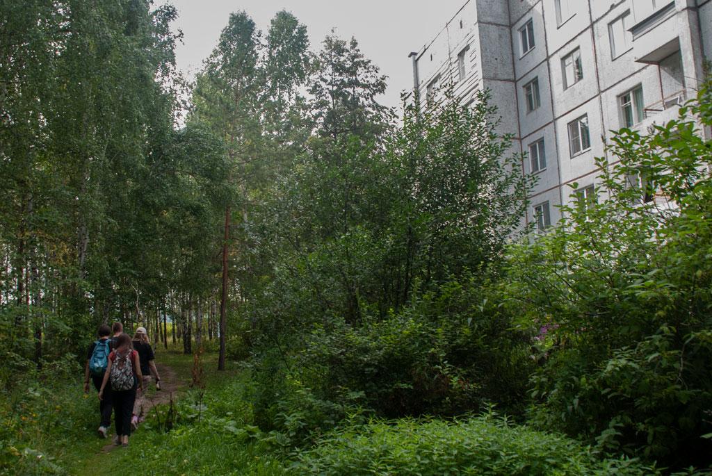 Forest and building in Krasnoyarsk