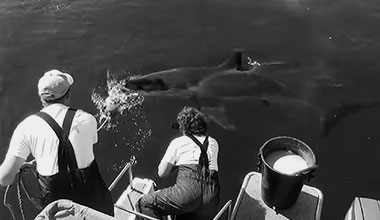 Learn more about White shark tracking