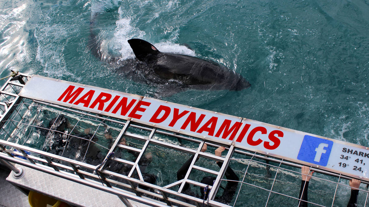 Marine Dynamics forged its stellar reputation as Gansbaai's leading great white shark cage diving company.
