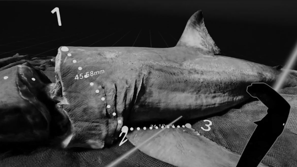 Learn more about VR Shark Research App