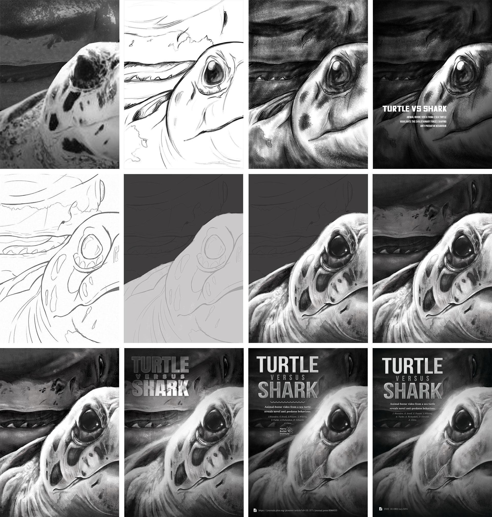 Turtle versus Shark artwork development