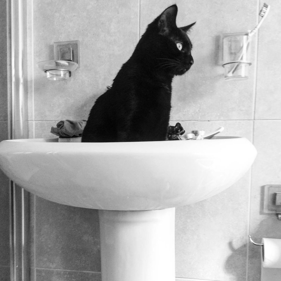Black cat in sink