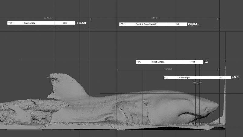 Digitising wildlife: Quantifying the accuracy of morphometrics captured from digital reconstructions created with 3D photogrammetry.