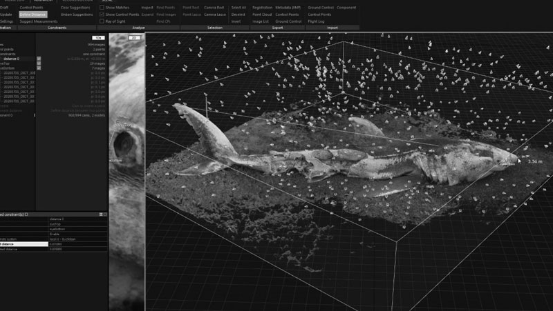Digitising Wildlife – Great white shark 3D photogrammetry, MRes project